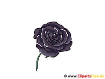 Czarna róża Clipart