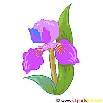 Iris çiçeği resmi, küçük resim, grafik, illüstrasyon ücretsiz