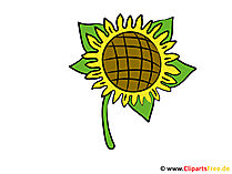 Sunflower image - vector clipart