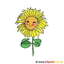 Ayçiçeği resmi clipart free
