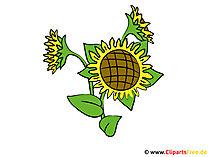 Sonnenblumen Bilder - Cliparts