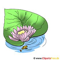 Teichrose Bild - Blumen Bilder und Grafiken kostenlos