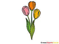 Tulpen Clipart