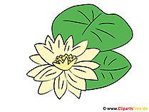 Wasserlilie Bild - Clipart