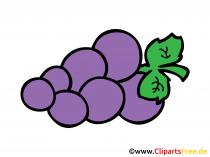 Weintrauben gezeichnet im Comicstil Clipart