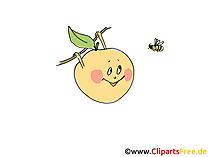 Apple Clipart, Pic, Image
