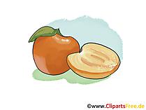 Aprikose Illustration, Bild, Clipart kostenlos