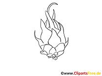 Bild zum Ausmalen Pitaya, Pitahaya, Drachenfrucht