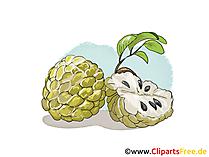 Cherimoya, suiker appel, room appel illustratie, afbeelding, gratis clipart