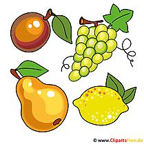 Fruit, fruitafbeeldingen, cliparts