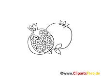 Granatapfel Bilder in schwarz-weiss