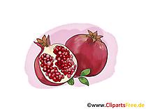 Granatapfel Illustration, Bild, Clipart kostenlos