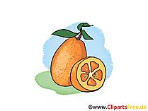Orangen Illustration, Bild, Clipart kostenlos