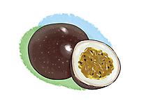 Passionsfrucht, Maracuja Illustration, Bild, Clipart kostenlos