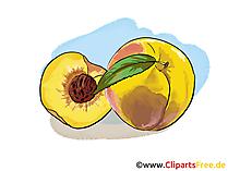 Pfirsich Illustration, Bild, Clipart kostenlos