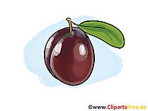 Pruim illustratie, afbeelding, gratis clipart