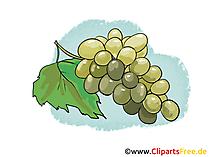 Druiven illustratie, foto, clipart gratis