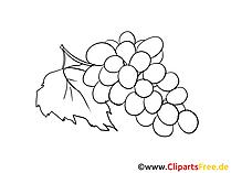 Druiven voor het kleuren van fruit clipart