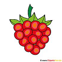 Grape Clip Art Gratis