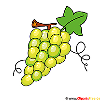 Weintrauben Clipart