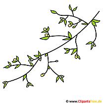 Blumen auf Ast Bild - Clipart