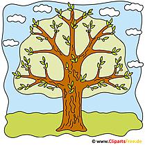 Fruehling Bilder - Baum auf der Wiese