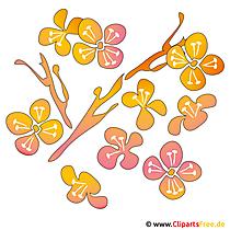 Fruehling Cliparts kostenlos - Blumen