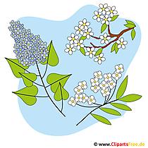 Fruehlingsblumen Bild - Clipart kostenlos