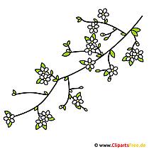 Kirsche Clipart - Bild free