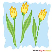 Tulpen Bild - Fruehling Cliparts kostenlos