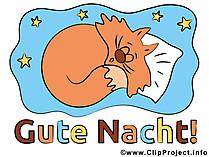 Katzenbild Gute Nacht