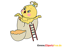 Clip Art Chicken