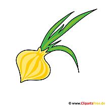 Soğan görüntüsü - vektör küçük resim