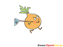 Zwiebel Clip Art, Illustration, Bild, Cartoon