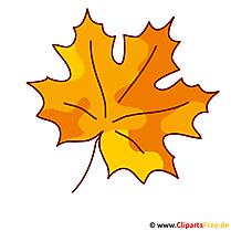 Ahornblatt Bild - Herbst Clipart