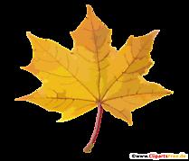 Frunze de arțar PNG cu fundal transparent