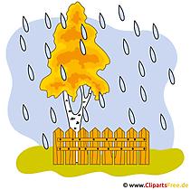 Birke Clipart - Herbst Bilder gratis