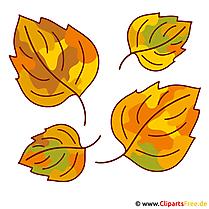 Blätter Clipart - Herbst Bilder gratis