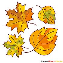 Bladeren, bladeren, boomblad - herfstfoto's gratis