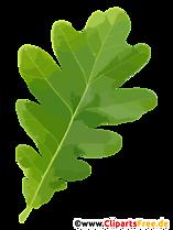 Frunze de stejar miniaturi, imagini, ilustrații transparente