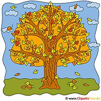 Eiche Clipart - Bilder Herbst