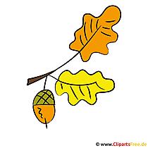 Eichel Clipart - Herbst Bilder gratis