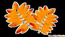 Imagine de frunze de toamnă frasin de munte galben, PNG, Clipart