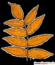 Frunze de frasin de munte galben - Ilustrații de toamnă gratuite