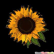 Floarea-soarelui galbenă cu frunze verzi Imagine PNG