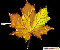 Galerie de frunze de arțar galben