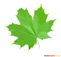 Frunze de arțar verde PNG Clipart