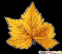 Toamnă imagine copac frunze galben transparent
