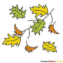 Jesień - clipart liść dębu