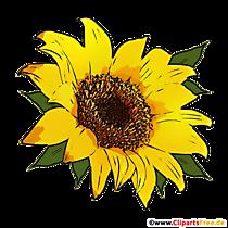 Ilustrație floarea-soarelui în format PNG transparent